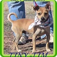 Adopt A Pet :: TINY-TIM - Albany, NY