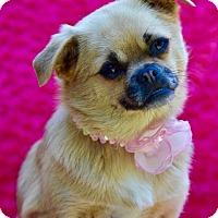 Adopt A Pet :: Susie Q - Irvine, CA