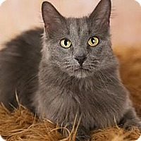 Adopt A Pet :: Rosie - Eagan, MN
