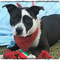 Adopt A Pet :: Desmond - Charlotte, NC