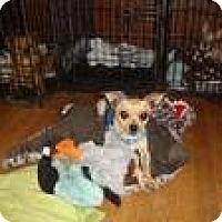 Adopt A Pet :: Taco - Leesport, PA