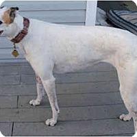 Adopt A Pet :: Sue - Fremont, OH