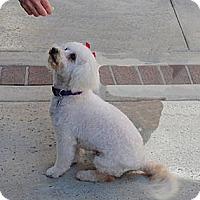 Adopt A Pet :: Winnie - ORANGE COUNTY, CA