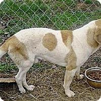 Adopt A Pet :: Franklin - Moulton, AL