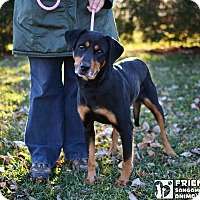 Adopt A Pet :: Muffin - Springfield, IL