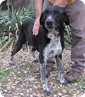 Labrador Retriever Mix Dog for adoption in Alstead, New Hampshire - Ozarks