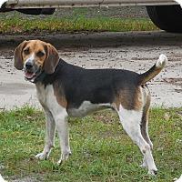 Adopt A Pet :: Rocket - Ormond Beach, FL