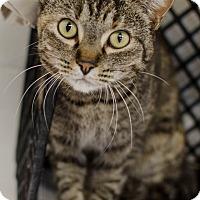 Adopt A Pet :: Rylie - Greenwood, SC
