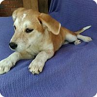 Adopt A Pet :: Tobin meet me 4/21 - Manchester, CT