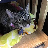 Adopt A Pet :: COMET - Canfield, OH