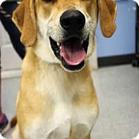 Adopt A Pet :: Ollie - Martinsville, IN