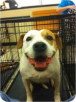 American Pit Bull Terrier Mix Dog for adoption in Blanchard, Oklahoma - Daisy