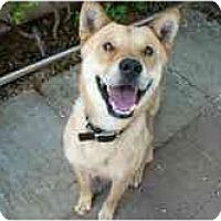 Adopt A Pet :: Mango - Marysville, CA