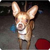 Adopt A Pet :: Jaby - Scottsdale, AZ