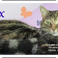 Adopt A Pet :: Dex - Mobile, AL