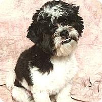 Adopt A Pet :: Sammy - Davie, FL