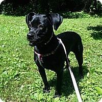 Adopt A Pet :: Bonnie - Bardonia, NY