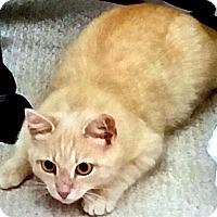 Adopt A Pet :: Mario - Alexandria, VA