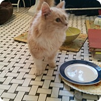 Adopt A Pet :: Peaches - Nanuet, NY