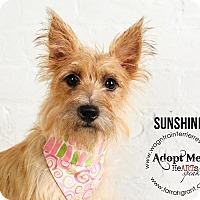 Adopt A Pet :: Sunshine - Omaha, NE