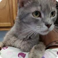 Adopt A Pet :: Abigail - Bedford, IN