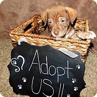 Adopt A Pet :: Wrigley - Grand Rapids, MI