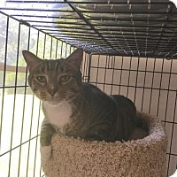 Adopt A Pet :: Norman (cl) - Alpharetta, GA