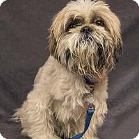 Adopt A Pet :: ET - Davis, CA
