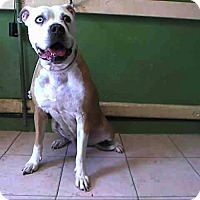 Adopt A Pet :: A5042056 is at Carson Shelter - Beverly Hills, CA