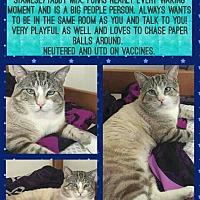 Adopt A Pet :: Shakespeare - Miami Shores, FL