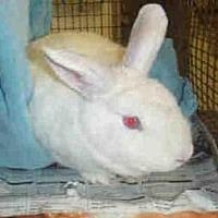 Adopt A Pet :: A1694278 - Los Angeles, CA