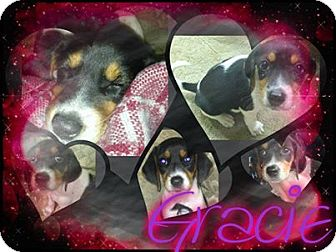 Hound (Unknown Type)/Beagle Mix Puppy for adoption in Alamosa, Colorado - Gracie