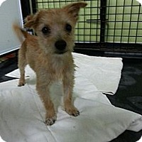 Adopt A Pet :: Hansel - Brattleboro, VT