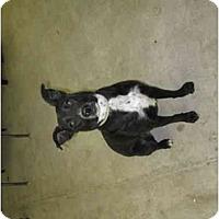 Adopt A Pet :: Jacquline - Wahoo, NE