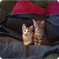 Adopt A Pet :: Thelma - Modesto, CA