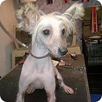 Adopt A Pet :: Fabio - South Amboy, NJ