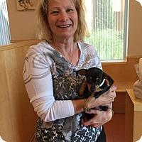 Adopt A Pet :: Tessa - Sacramento, CA