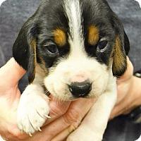Adopt A Pet :: Olaf - Lake Odessa, MI