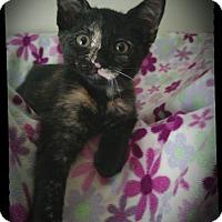 Adopt A Pet :: Jax - Richmond, VA