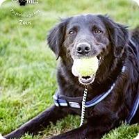 Adopt A Pet :: Zeus (Courtesy Listing) - Scottsdale, AZ