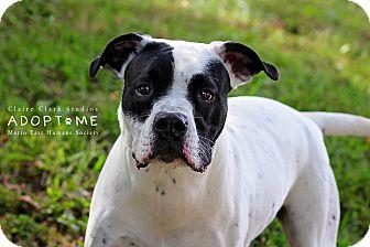 Terrier (Unknown Type, Medium) Mix Dog for adoption in Edwardsville, Illinois - Harry