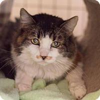 Adopt A Pet :: Mustacha - Fountain Hills, AZ