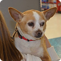 Adopt A Pet :: Buddy - Lodi, CA