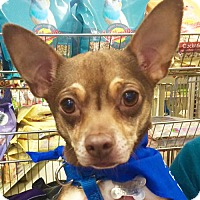 Adopt A Pet :: Fred *Adopt or Foster* - Fairfax, VA