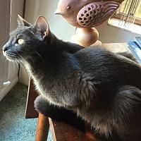 Adopt A Pet :: Portia - Tampa, FL