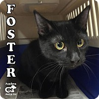 Adopt A Pet :: Foster - Carencro, LA