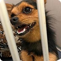 Adopt A Pet :: Romeo - Jupiter, FL