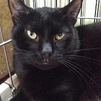 Adopt A Pet :: Petey - Breinigsville, PA