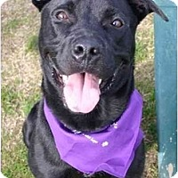 Adopt A Pet :: Randy - Auburn, CA