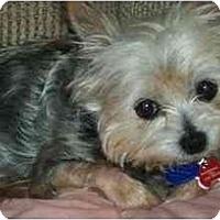 Adopt A Pet :: Evie - Gulfport, FL